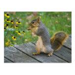 Squirrel with cookie/Squirrel with cookie Postcards