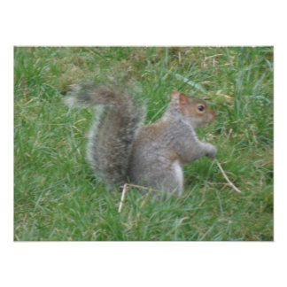 Squirrel with Curly Tail Poster