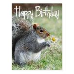 Squirrel with Daisy Happy Birthday Postcard