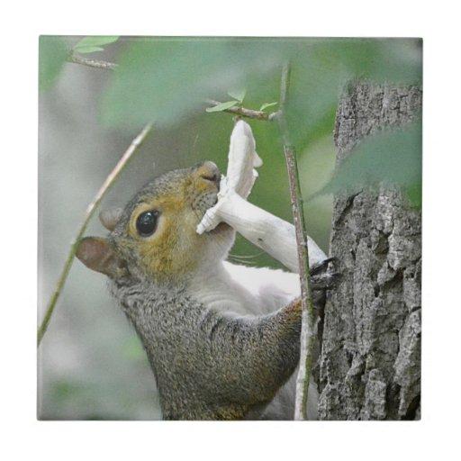Squirrel With Mushroom Tile