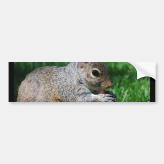 Squirrel with Nut Bumper Sticker