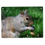 Squirrel with Nut Dry Erase Board