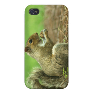Squirrel with Nut iPhone 4 Cover