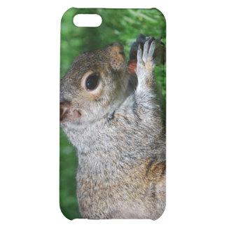 Squirrel with Nut iPhone Case iPhone 5C Case