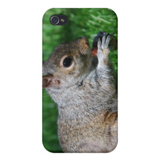 Squirrel with Nut iPhone Case Case For iPhone 4
