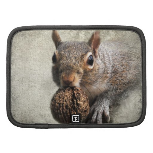 Squirrel With Nut Organizers