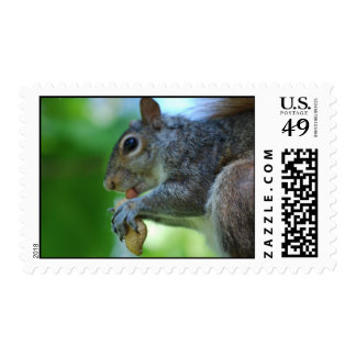 Squirrel with Nut Postage Stamp