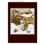 Squirrel with pinecones - greeting card