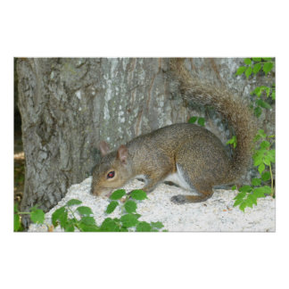 Squirrel with redeye print