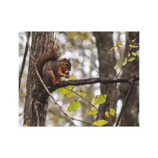 Squirrel with Walnut Canvas Print