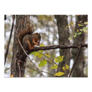 Squirrel with Walnut Photo Print