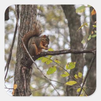 Squirrel with Walnut Square Sticker