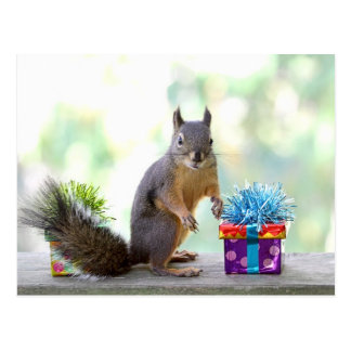 Squirrel with Wrapped Presents Post Card