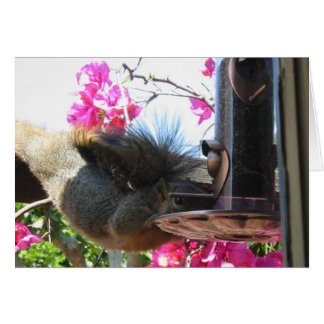 Squirrel World Congratulations Card