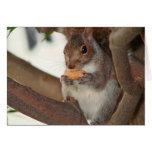 squirrelfriend cards