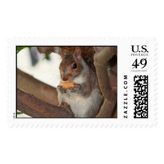 squirrelfriend postage