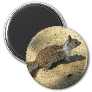 Squirrell Fridge Magnets