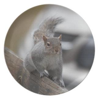 SquirrelPoised para la placa de la acción Plato Para Fiesta