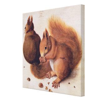 Squirrels, 1512 canvas print