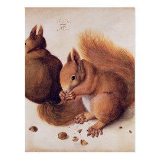Squirrels, 1512 postcard