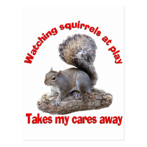 Squirrels at Play Post Cards