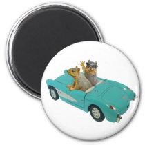 Squirrels Car magnet