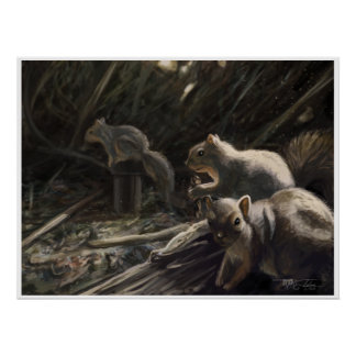 SQUIRRELS from El Dorado Nature Park Posters