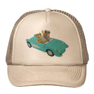 Squirrels in Car Hat