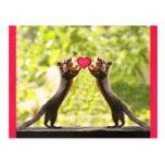 Squirrels in Love Photo Postcard