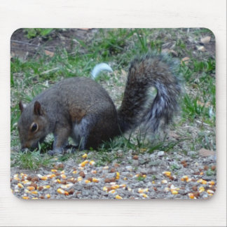 Squirrels Lunch Time Mouse Pad