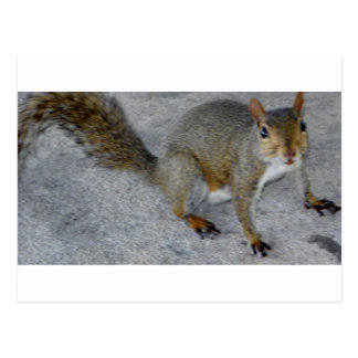 squirrels matter.JPG Postcard