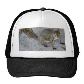 squirrels matter.JPG Trucker Hat