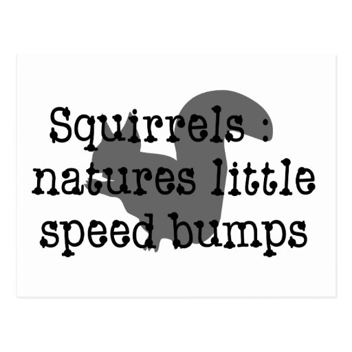 Squirrels : Natures Little Speedbumps Postcards