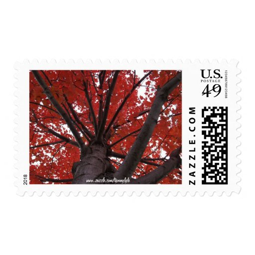 Squirrels Perspective-Red Fall Tree Postage Stamp