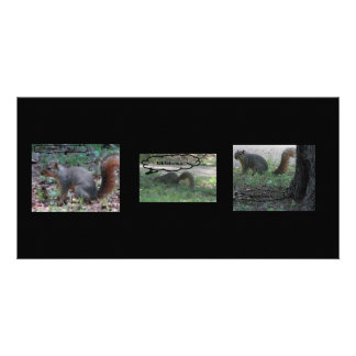 squirrels photo cards