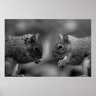 Squirrels Poster Print