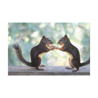 Squirrels Sharing a Peanut Photo Canvas Print