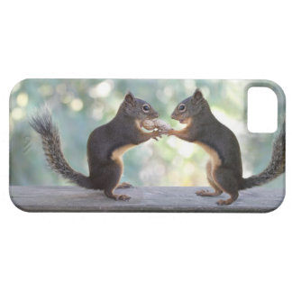 Squirrels Sharing a Peanut Photo iPhone 5 Covers