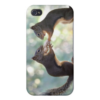 Squirrels Sharing a Peanut Photo iPhone 4/4S Covers