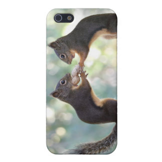 Squirrels Sharing a Peanut Photo iPhone 5 Cover