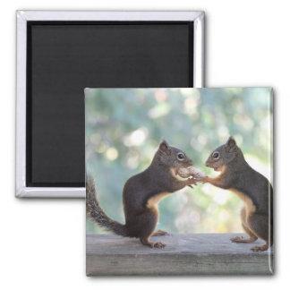 Squirrels Sharing a Peanut Photo Magnet