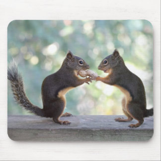 Squirrels Sharing a Peanut Photo Mouse Pads