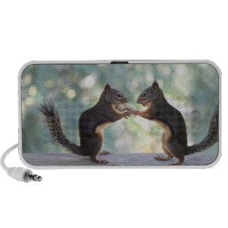 Squirrels Sharing a Peanut Photo Speaker