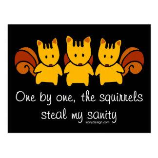 Squirrels steal my sanity postcard