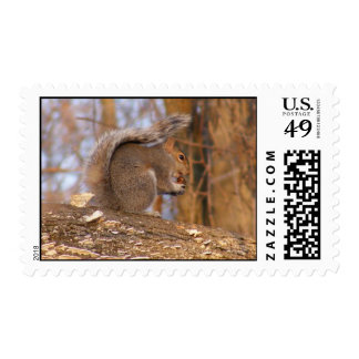 squirrely postage