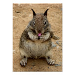Squirrely Squirrel Poster
