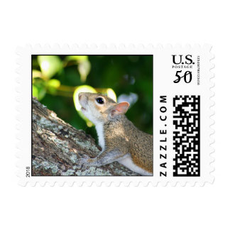 Squirrely! stamp