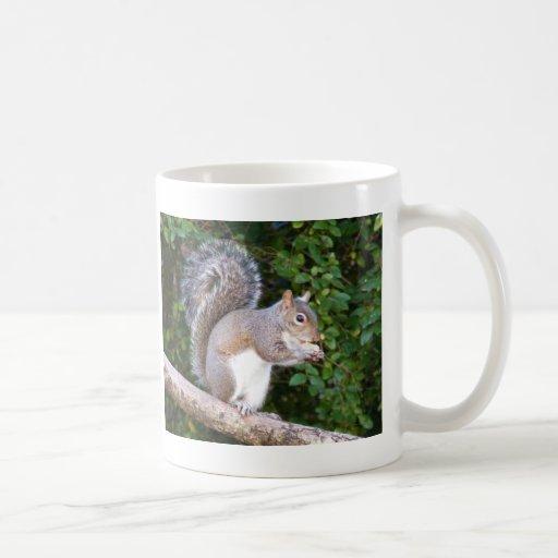 Squrrel Eating Bread Classic White Coffee Mug