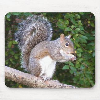 Squrrel Eating Bread Mouse Pad