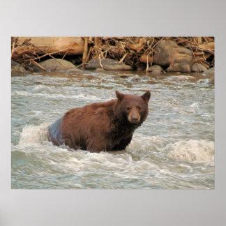 Sr. Bear Póster